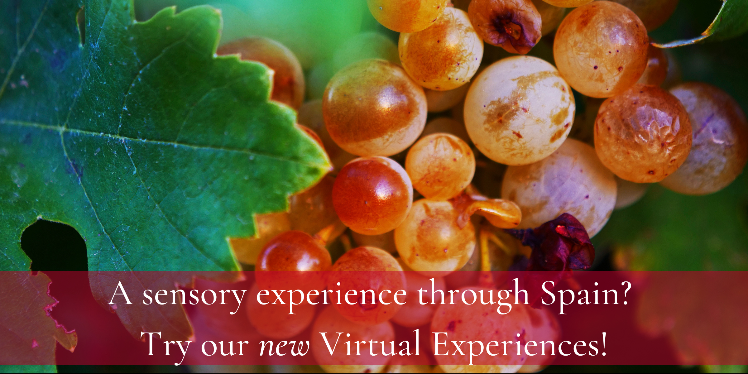Insiders Travel_ A sensory experience through Spain_ Try our Virtual Experiences
